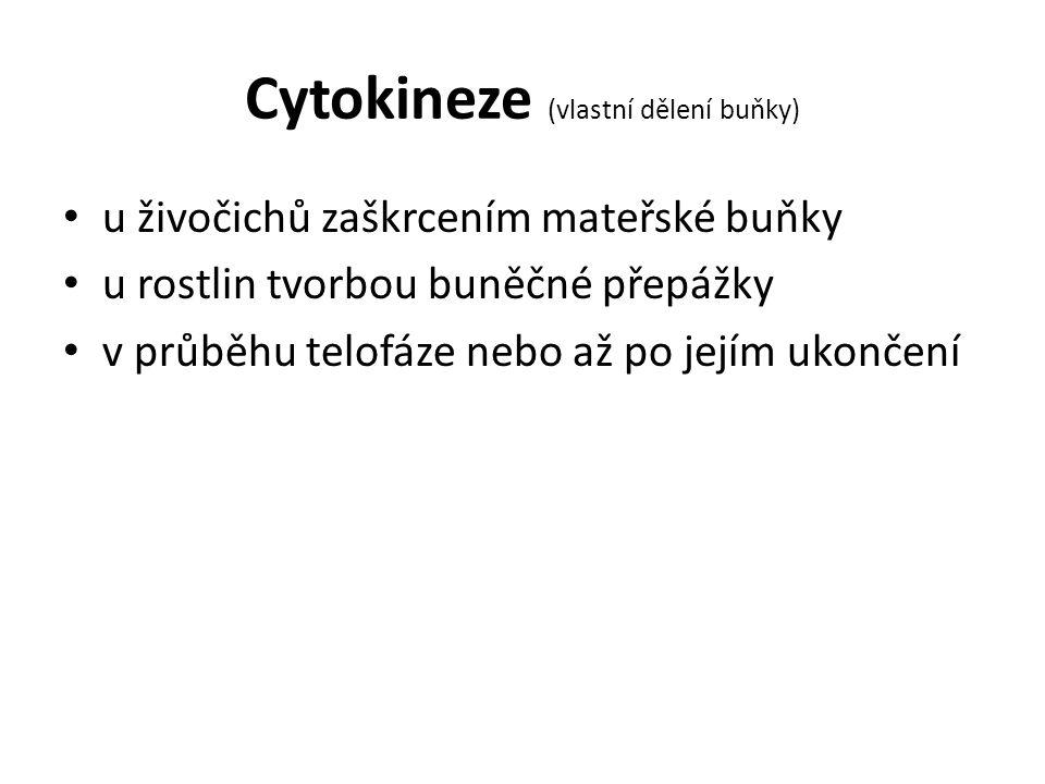 Cytokineze (vlastní dělení buňky)