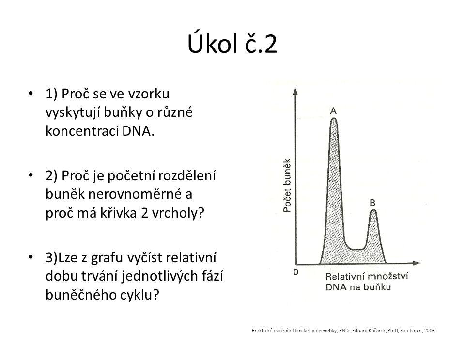 Úkol č.2 1) Proč se ve vzorku vyskytují buňky o různé koncentraci DNA.