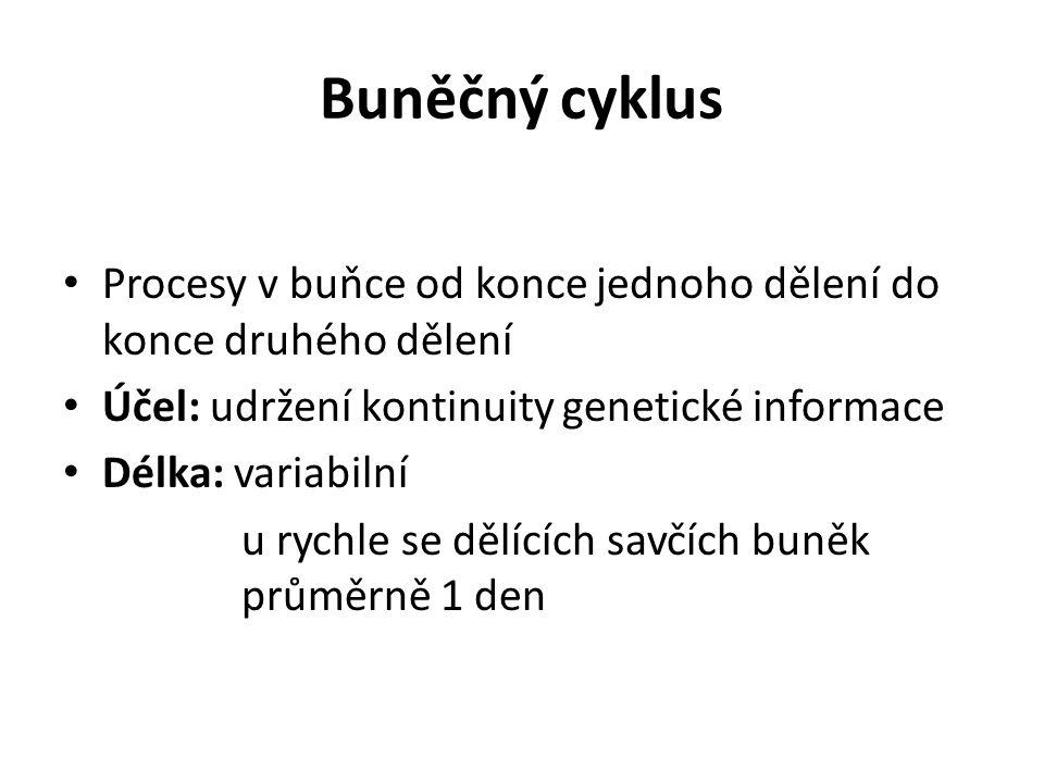 Buněčný cyklus Procesy v buňce od konce jednoho dělení do konce druhého dělení. Účel: udržení kontinuity genetické informace.