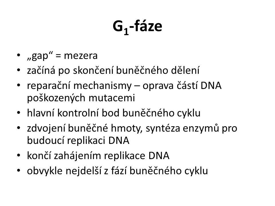"""G1-fáze """"gap = mezera začíná po skončení buněčného dělení"""