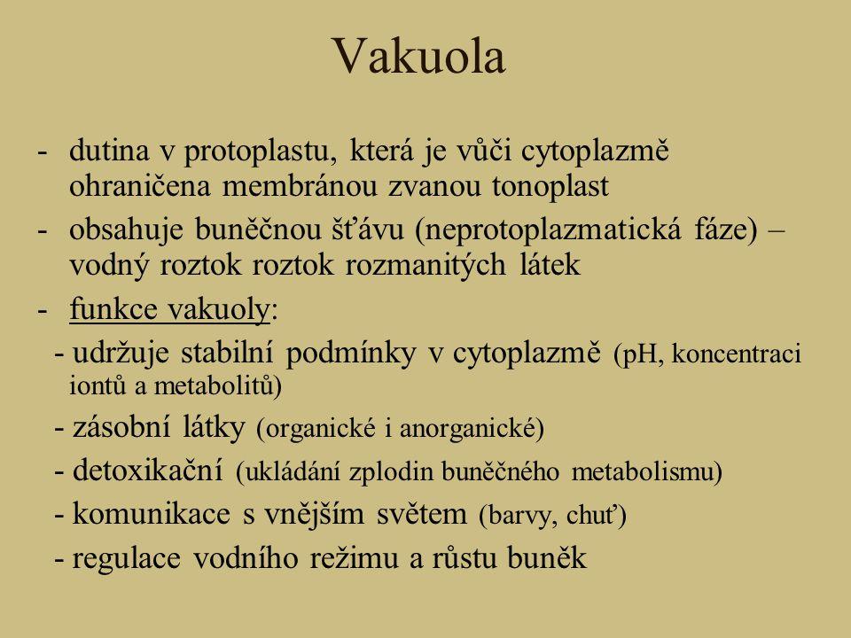 Vakuola dutina v protoplastu, která je vůči cytoplazmě ohraničena membránou zvanou tonoplast.