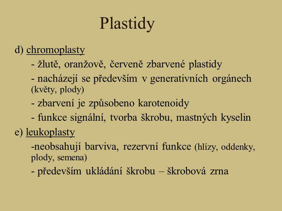Plastidy d) chromoplasty - žlutě, oranžově, červeně zbarvené plastidy