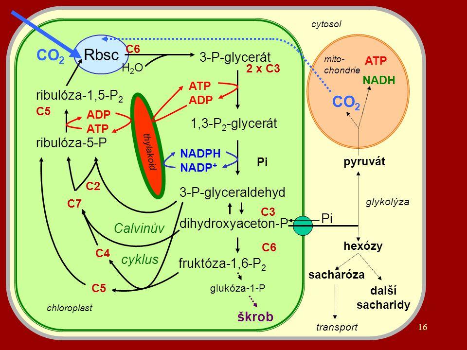 Rbsc CO2 CO2 3-P-glycerát ribulóza-1,5-P2 1,3-P2-glycerát ribulóza-5-P