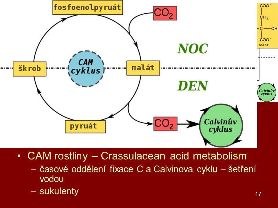 C3, C4 a CAM rostliny C3 rostliny – produkt C3 – glycerát