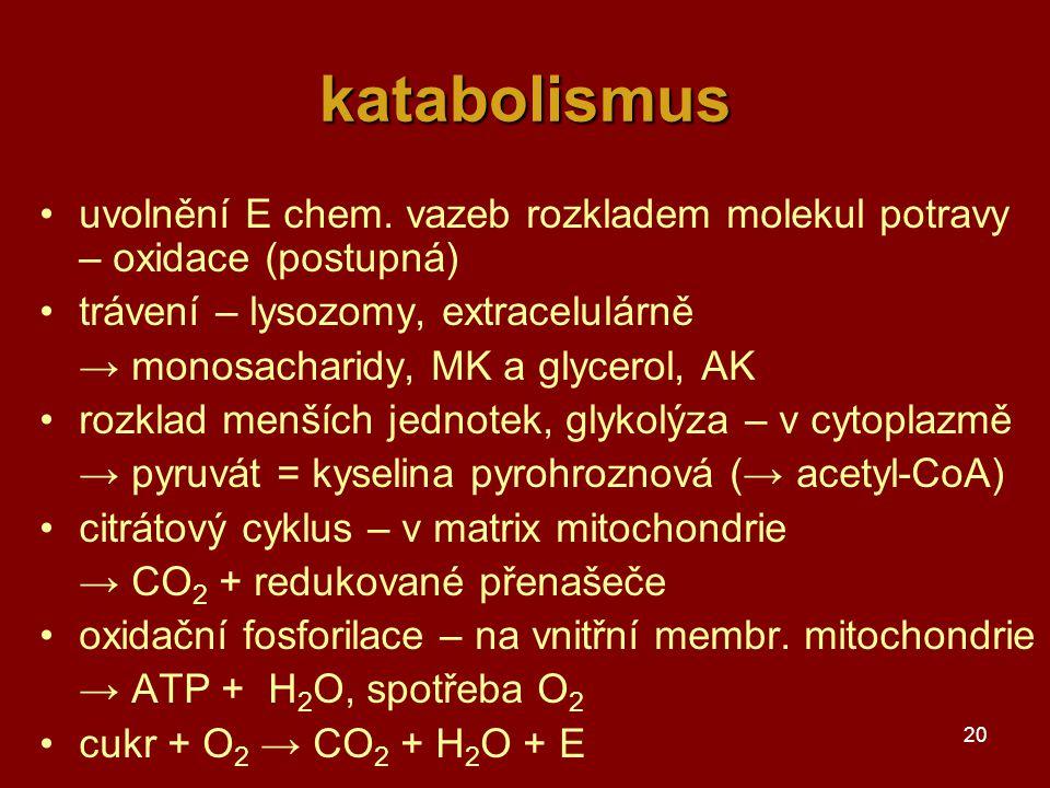 katabolismus uvolnění E chem. vazeb rozkladem molekul potravy – oxidace (postupná) trávení – lysozomy, extracelulárně.