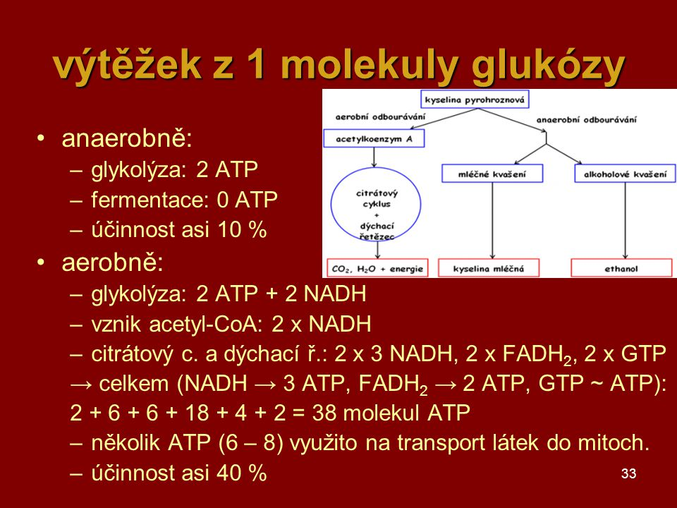 výtěžek z 1 molekuly glukózy
