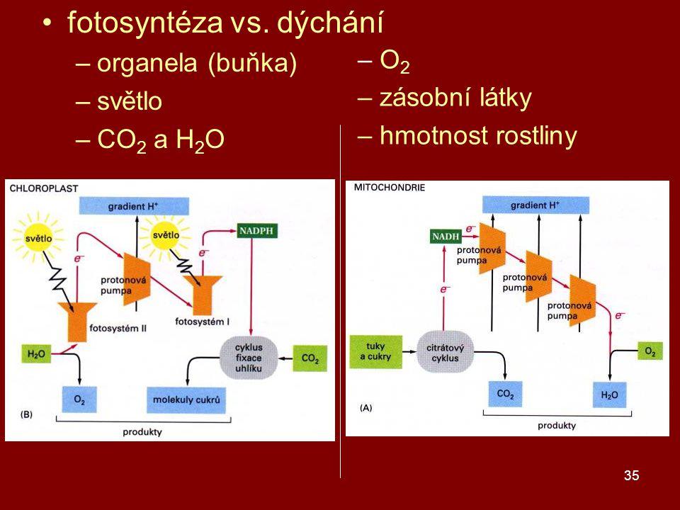 fotosyntéza vs. dýchání