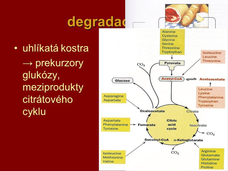 degradace AK uhlíkatá kostra