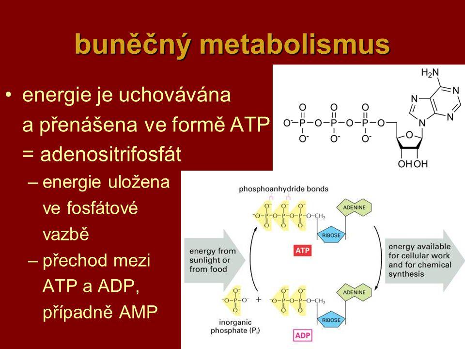 buněčný metabolismus energie je uchovávána a přenášena ve formě ATP
