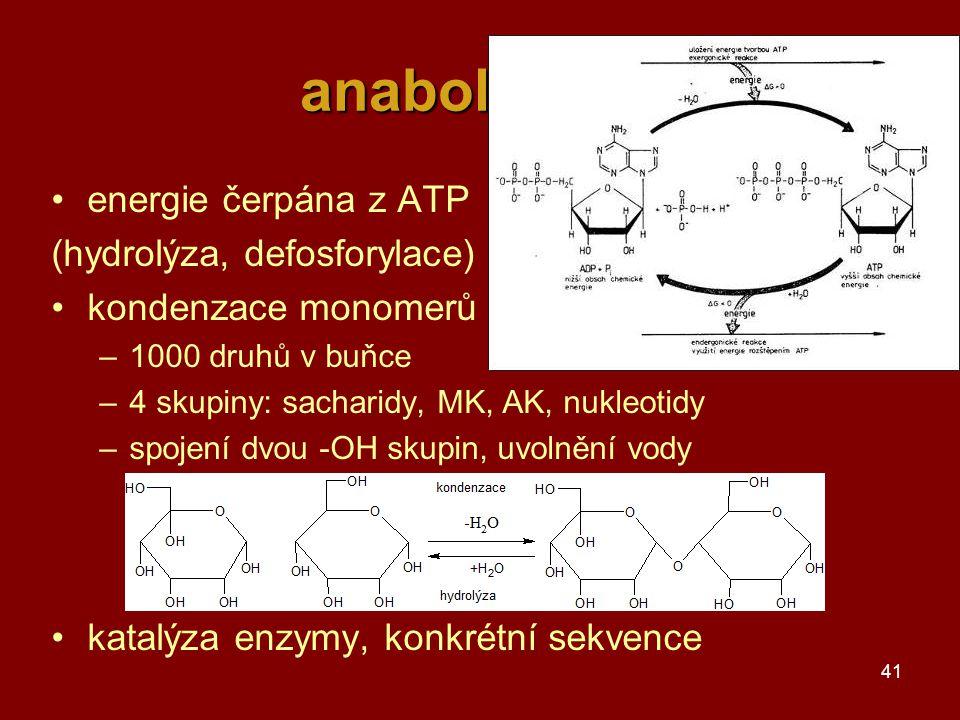 anabolismus energie čerpána z ATP (hydrolýza, defosforylace)