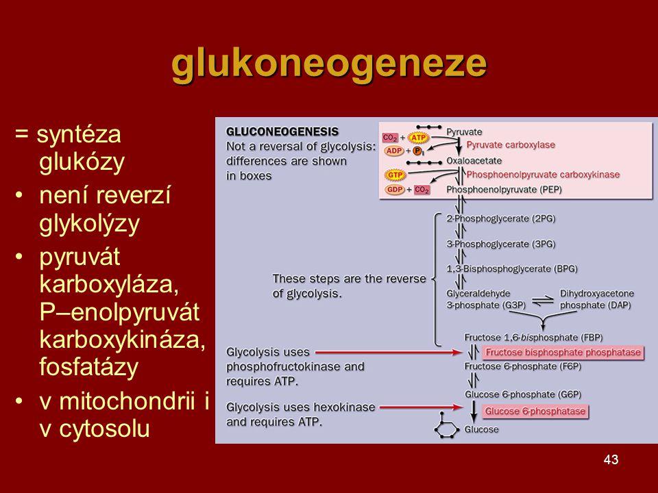glukoneogeneze = syntéza glukózy není reverzí glykolýzy