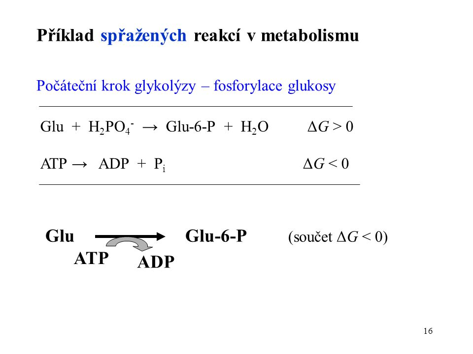 Glu Glu-6-P (součet ΔG < 0)