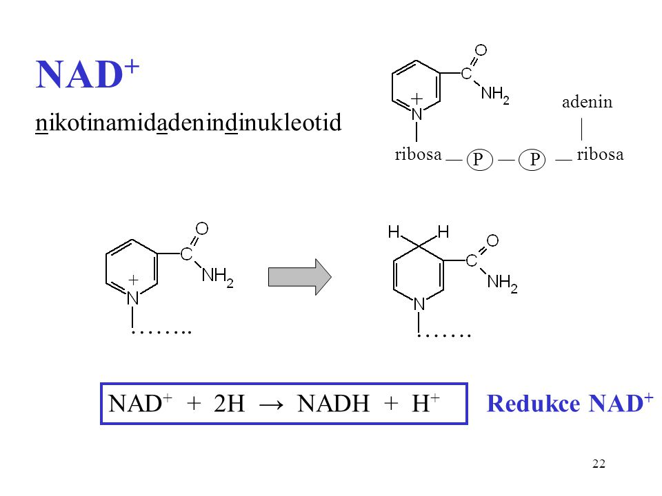 NAD+ nikotinamidadenindinukleotid …….. ……. NAD+ + 2H → NADH + H+