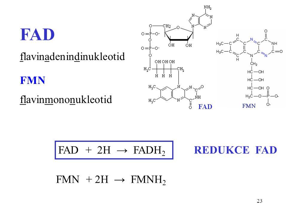 FAD flavinadenindinukleotid FMN flavinmononukleotid FAD + 2H → FADH2