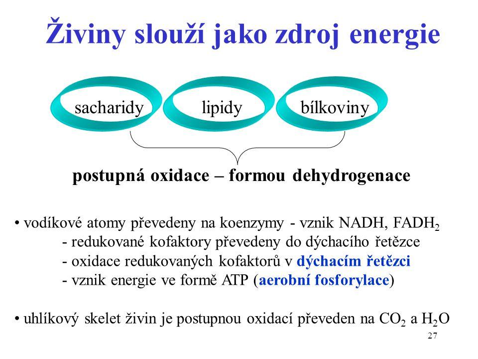 Živiny slouží jako zdroj energie