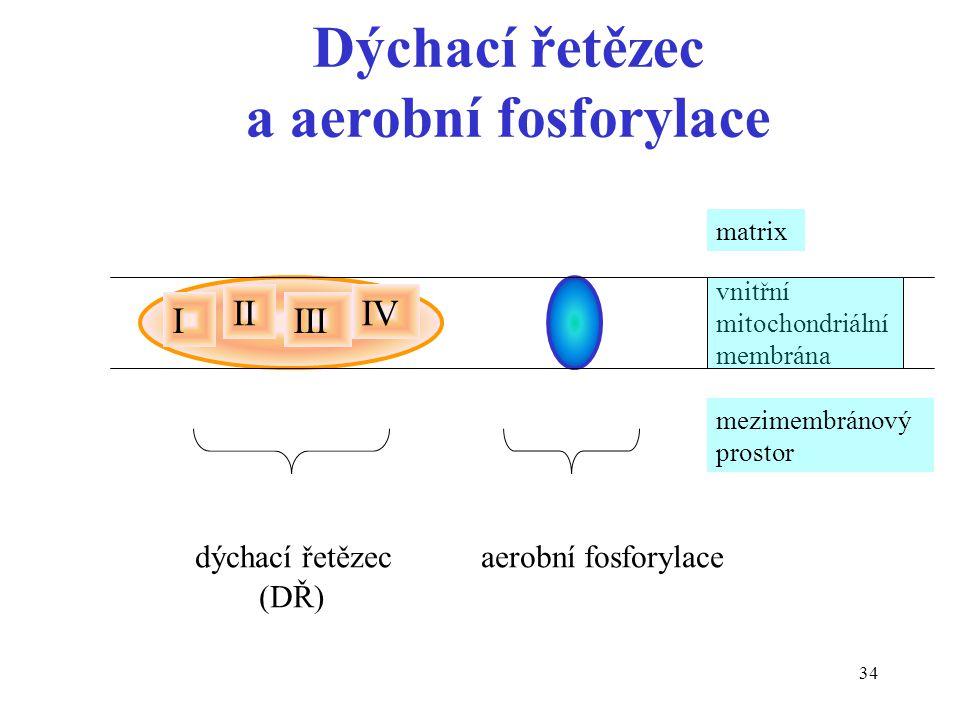 Dýchací řetězec a aerobní fosforylace