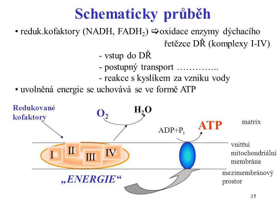 "Schematicky průběh ATP O2 II IV I III ""ENERGIE"