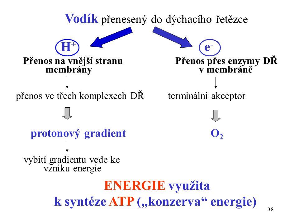 """k syntéze ATP (""""konzerva energie)"""