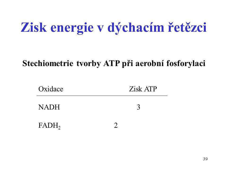 Zisk energie v dýchacím řetězci