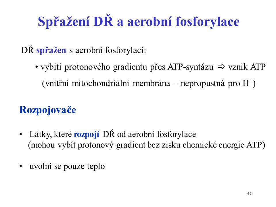 Spřažení DŘ a aerobní fosforylace