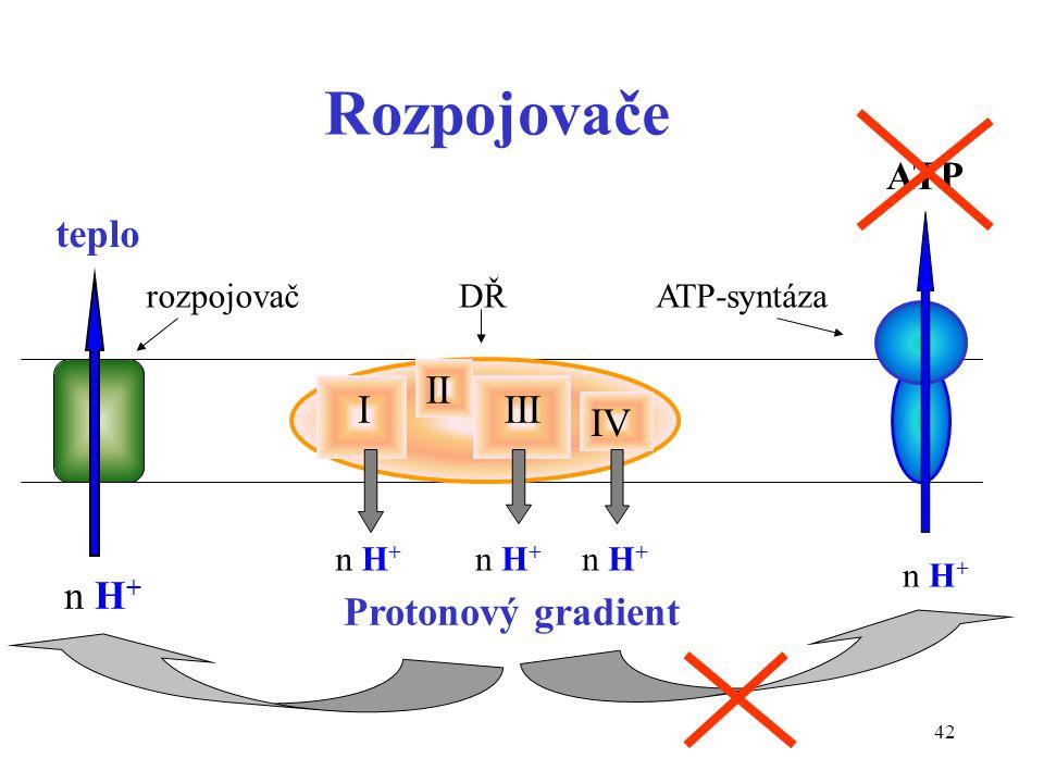 Rozpojovače ATP teplo II I III IV n H+ Protonový gradient rozpojovač