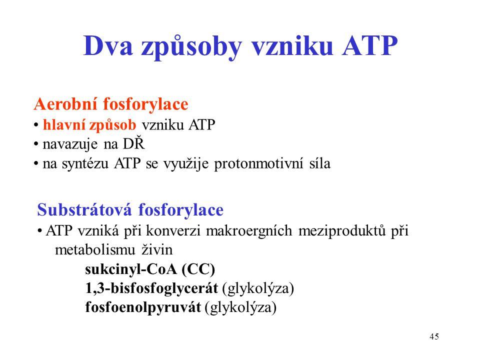 Dva způsoby vzniku ATP Aerobní fosforylace Substrátová fosforylace