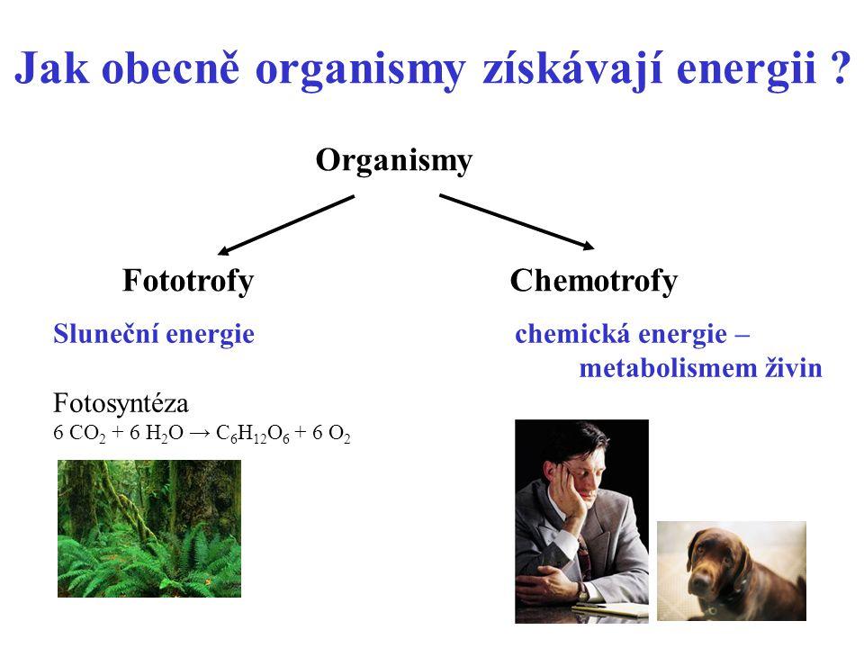 Jak obecně organismy získávají energii