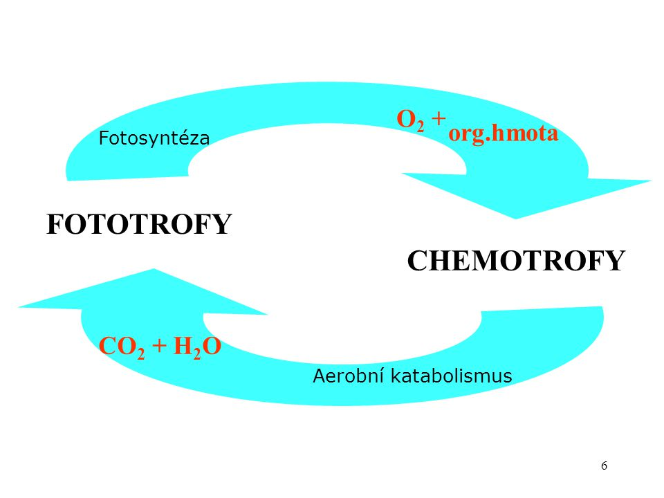 FOTOTROFY CHEMOTROFY O2 + org.hmota CO2 + H2O Fotosyntéza