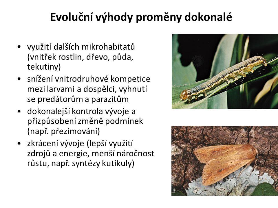 Evoluční výhody proměny dokonalé