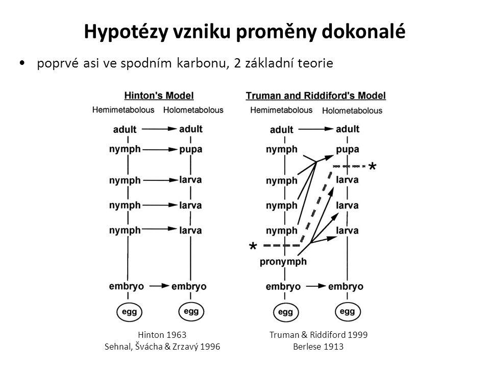 Hypotézy vzniku proměny dokonalé