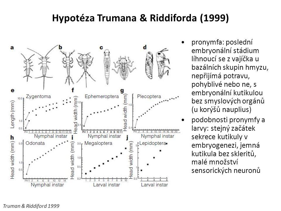 Hypotéza Trumana & Riddiforda (1999)