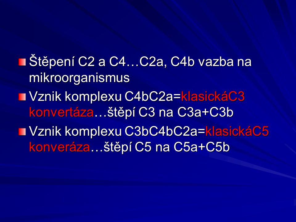 Štěpení C2 a C4…C2a, C4b vazba na mikroorganismus