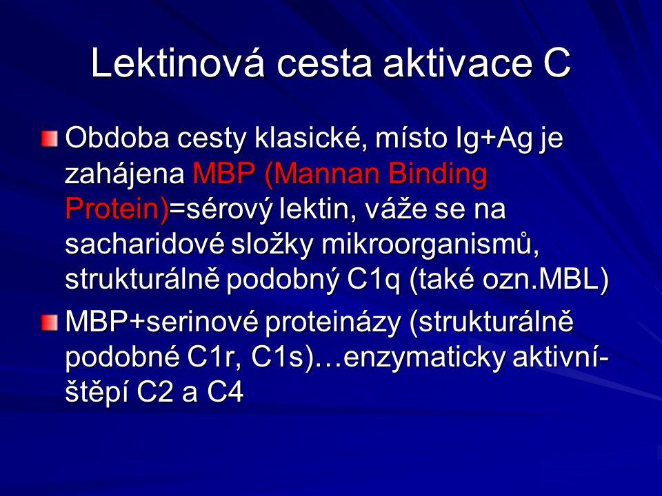 Lektinová cesta aktivace C