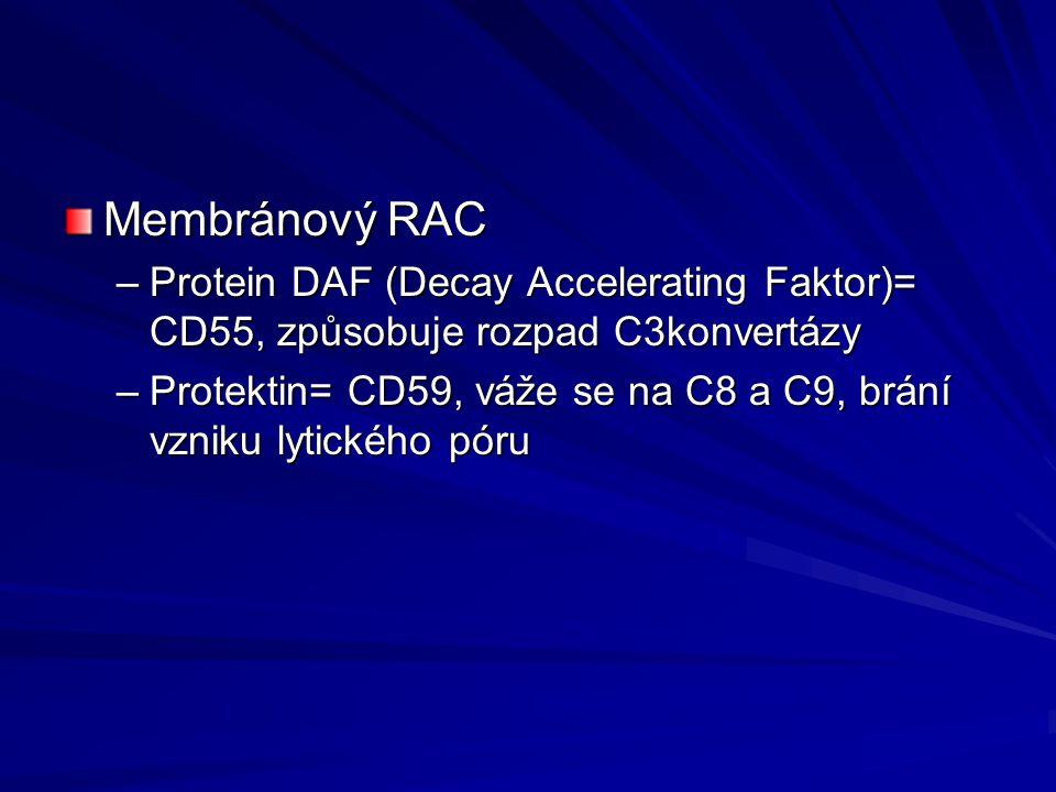 Membránový RAC Protein DAF (Decay Accelerating Faktor)= CD55, způsobuje rozpad C3konvertázy.