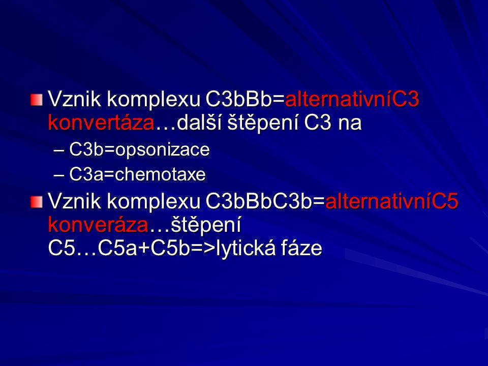 Vznik komplexu C3bBb=alternativníC3 konvertáza…další štěpení C3 na