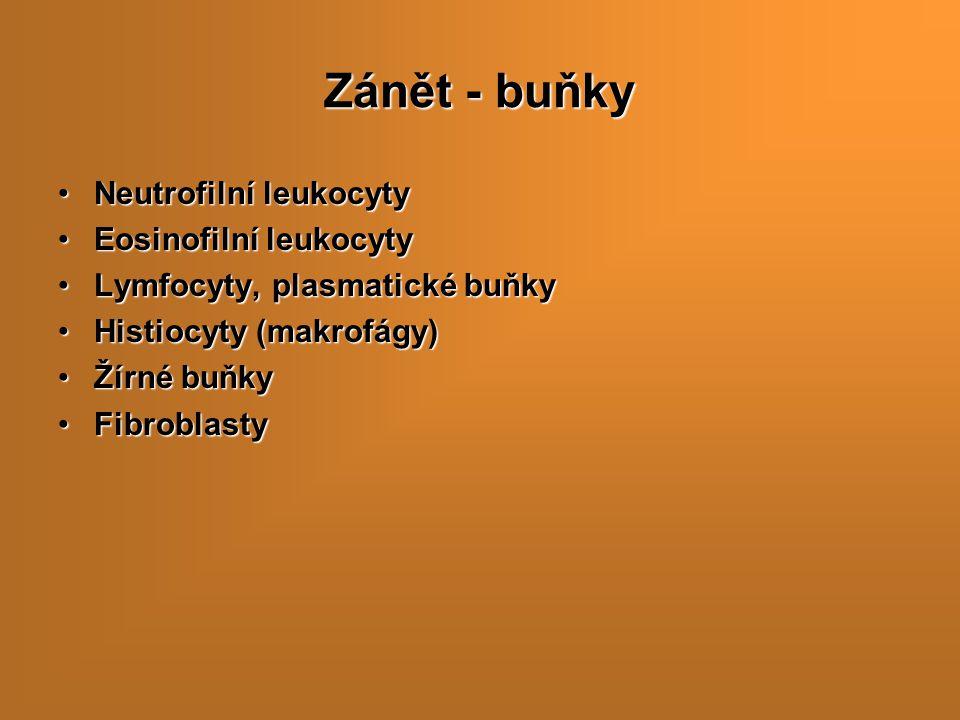 Zánět - buňky Neutrofilní leukocyty Eosinofilní leukocyty