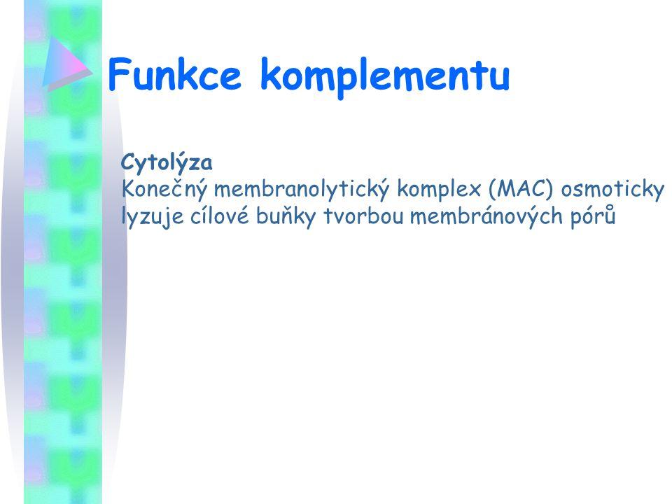 Funkce komplementu Cytolýza