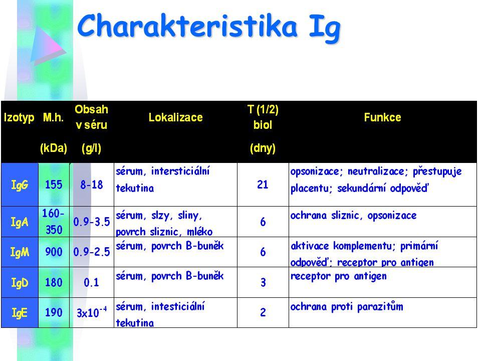 Charakteristika Ig ¾: IgG po 1/6: IgA, IgM pod 1%: IgD