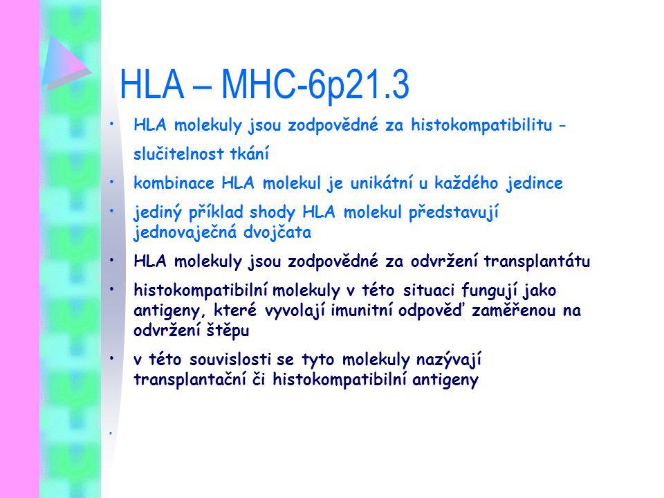 HLA – MHC-6p21.3 HLA molekuly jsou zodpovědné za histokompatibilitu -