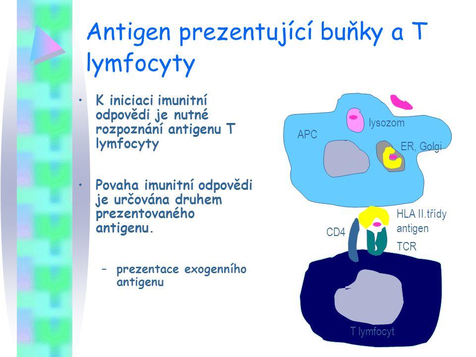 Antigen prezentující buňky a T lymfocyty