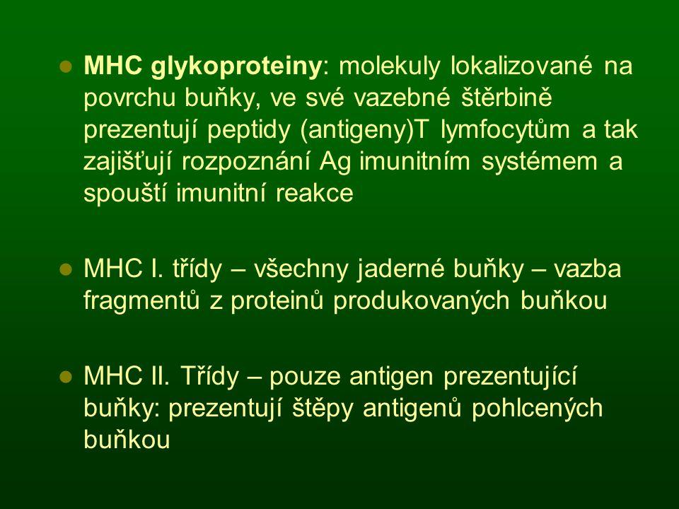 MHC glykoproteiny: molekuly lokalizované na povrchu buňky, ve své vazebné štěrbině prezentují peptidy (antigeny)T lymfocytům a tak zajišťují rozpoznání Ag imunitním systémem a spouští imunitní reakce