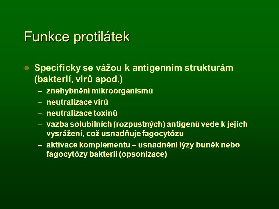 Funkce protilátek Specificky se vážou k antigenním strukturám (bakterií, virů apod.) znehybnění mikroorganismů.