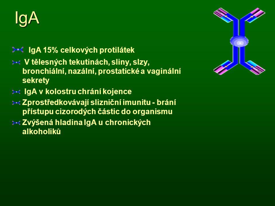 IgA IgA 15% celkových protilátek