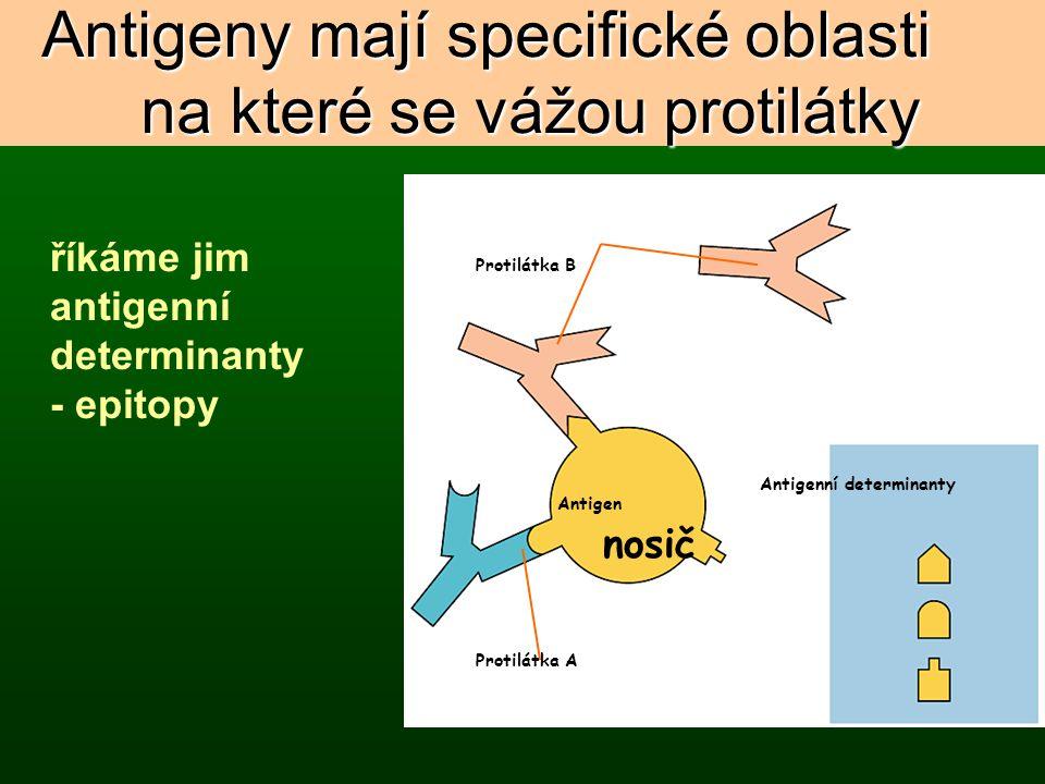 Antigeny mají specifické oblasti na které se vážou protilátky