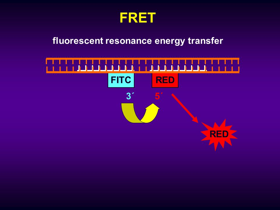 fluorescent resonance energy transfer