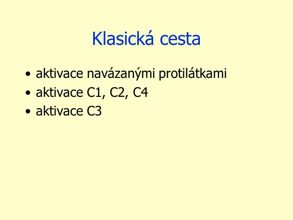 Klasická cesta aktivace navázanými protilátkami aktivace C1, C2, C4