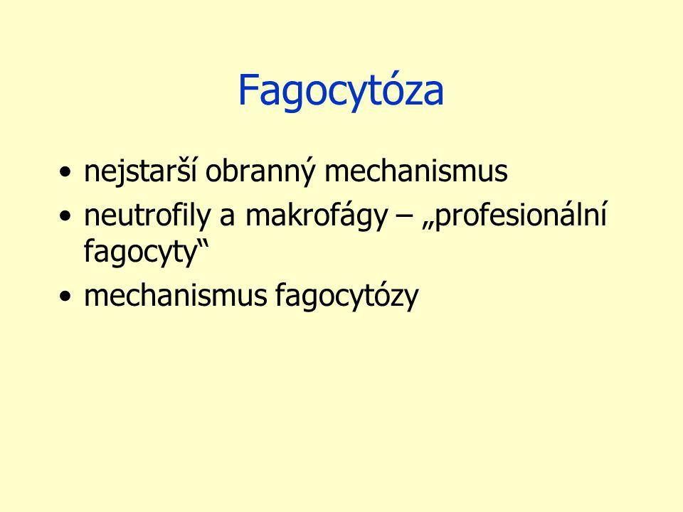 Fagocytóza nejstarší obranný mechanismus