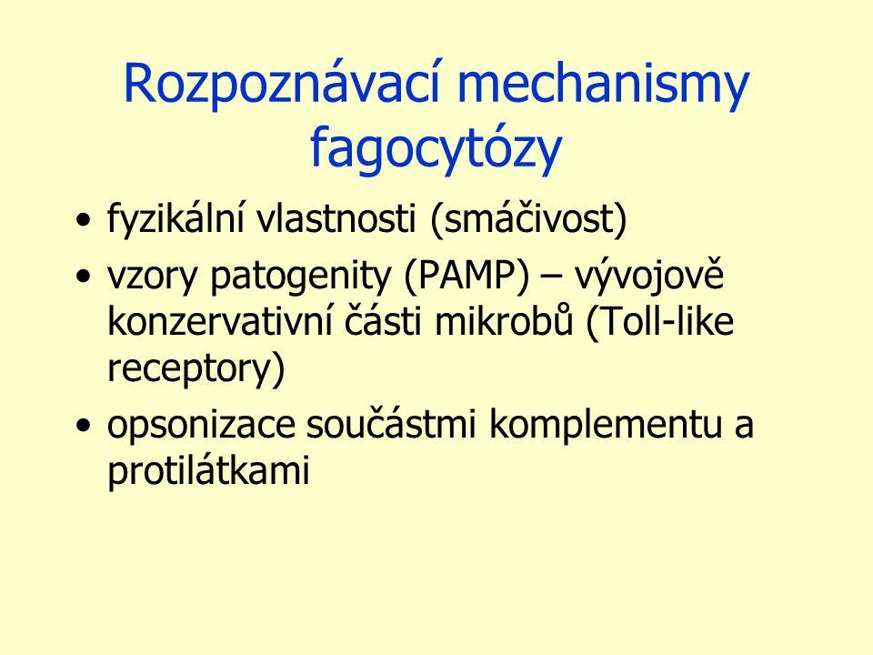 Rozpoznávací mechanismy fagocytózy