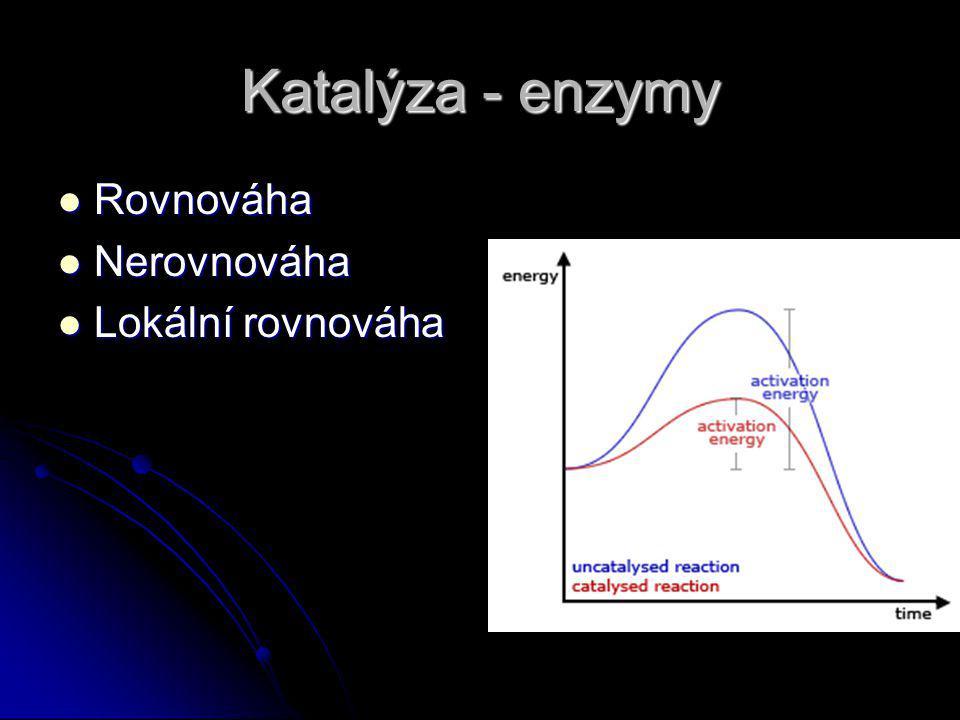 Katalýza - enzymy Rovnováha Nerovnováha Lokální rovnováha