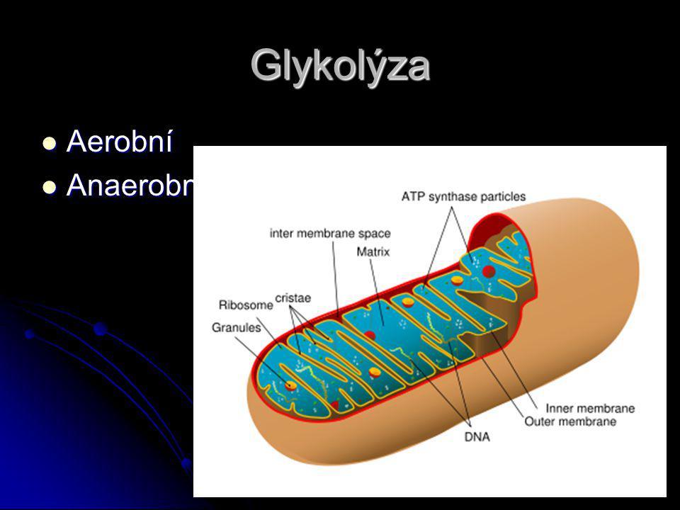 Glykolýza Aerobní Anaerobní